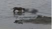 UP: Two more dead bodies found lying near Ganga cremated after video of dogs mauling them goes viral