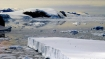 Antarctic nearing climate disaster despite treaty