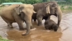 Viral: Baby elephant enjoys bathing in a river as mom keeps a close watch