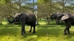 Video of elephant drinking water from sprinkler goes viral. Twitter showers all its love