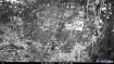 Can you spot the Tiger in this picture? Image from Dampa Tiger Reserve goes viral