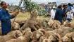 Bakri Eid 2021: Amid outbreak, sacrificial goats get expensive, prices go upto whopping ₹4.5 lakh