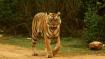 International Tiger Day: PM Modi shares stunning images