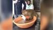 Viral video shows Monkey washing plates at chai stall