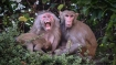 China's first human infection case with Monkey B virus dies: Report