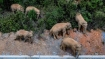 Chinese elephants' epic expedition ending?
