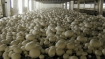 How mushroom cultivation transformed a village