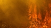 California wildfire threatens world's largest tree