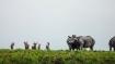Assam Cabinet decides to rename Rajiv Gandhi National Park