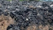 Amidst concerns of power blackouts, PMO likely to review coal supply situation today