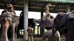 Assam elephants to endure a 70-hour journey for Jagannath Yatra, activists livid