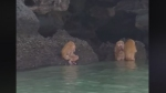 Video shows bizarre Ewok-like creatures near cave of Krabi coast