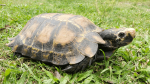 How an expedition to Arunachal Pradesh led to the discovery of a new tortoise species