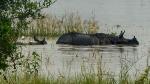 Assam floods: 90% of Kaziranga Park submerged; anti-poaching camps affected