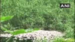 Bengaluru: Quintals of dead fish found floating in Whitefield Sheelavantanakere lake