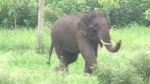 Decoding solutions to curb illegal wildlife trade in cyber space