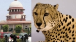 Supreme Court allows introduction of African Cheetahs in India
