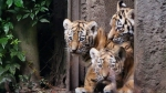 Delhi zoo set to welcome more than 10 animal species from states