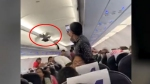 Spotted: Viral video shows pigeon flying in GoAir flight, passengers try to catch it