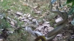 Swarm of mating snakes prompts partial closure of Florida city park