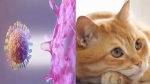 Coronavirus can infect cats, not dogs: Study