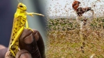 Centre asks states to streamline inter-state movement of personnel engaged in locust control