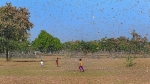 Chances of locusts reaching Karnataka remote
