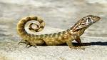 World Lizard Day 2020: Interesting facts about lizard