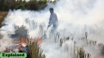 Explained: Will stubble burning higher the risk of COVID situation in northern states?