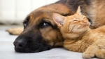 Noida residents can now register their pets on this new app