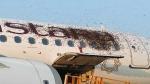 Watch: Honeybees swarm land on two flights at Kolkata airport