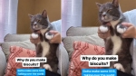 This dancing cat answering questions will leave you in splits