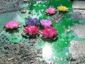 BBMP polls tomorrow: After anaconda, crocodile, now Lotuses bloom on Bengaluru roads