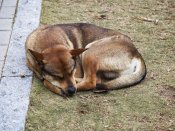 Sterilisation of street dogs, not a solution: Kerala Chief Whip