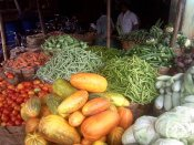 Prices of vegetables fall as supply improves