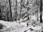 Himachal reels under cold conditions