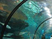 Man-made underwater sound may affect marine ecosystem