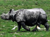 Assam 2016: Another rhino falls victim even as poaching became key poll issue