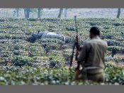 Rhino killings in Assam: Forest staff battle outdated arms, irregular salaries