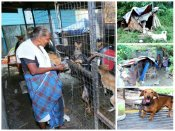 In Pics: Two poverty stricken women take care of over 100 animals in Kottayam