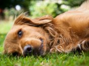 US dog saves owner by lying on him for nearly 24 hours