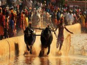 What you need to know about Kambala