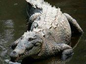 Odisha: 6-year-old girl battles with crocodile to save her friend