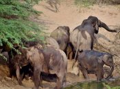 Drought: 26 elephants died in southeren forests in just 4 months