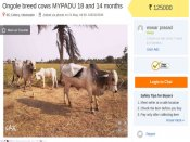 After Centre's ban on sale of cattle for slaughter, Cows up for sale on OLX