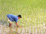 Southwest Monsoon covers entire Maha, brings relief to farmers