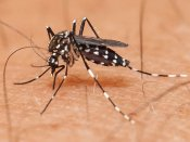 Viral fever cases on the rise in Southern states