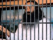 Dera chief's jail life: Drinking only water, sleeping on straw mattress