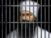 Ram Rahim jailed: Dera chief to move HC against verdict