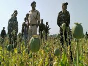 Three arrested in J&K with poppy, cannabis: Why are these illegal?